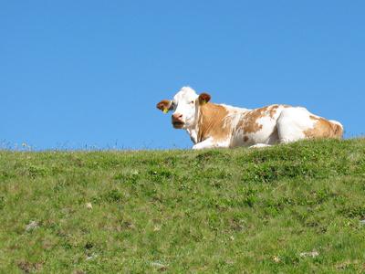 Impressionen aus Südtirol 5