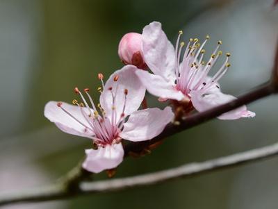Frühling Freude
