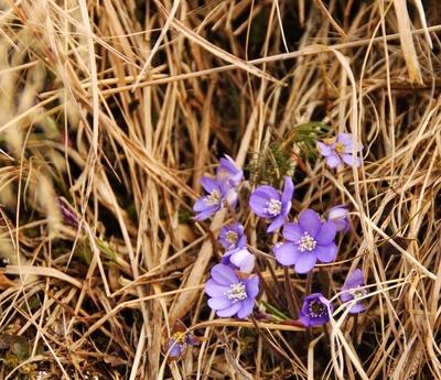 Frühjahrspollen im April 01