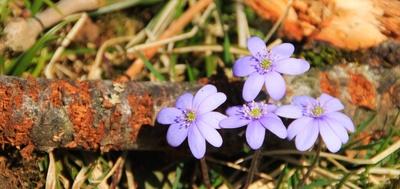 Frühjahrspollen im April 05