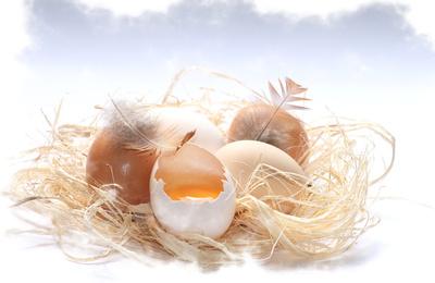 das gelbe vom ei...ganz frisch