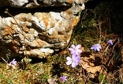Im Schatten der Felsen 04
