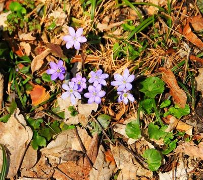 Leuchtender Frühling 2013...01