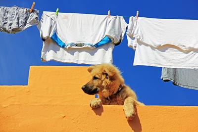 Wäschehund