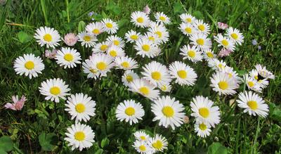 Frühlingsspaziergang - Blütenteppich