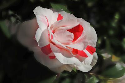 Blume-0158