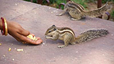 Fütterung der Nagetiere