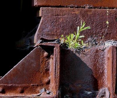 zartes Grün auf Rost