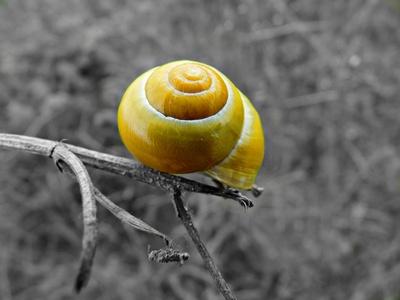 Gelbe Schnecke auf Ast