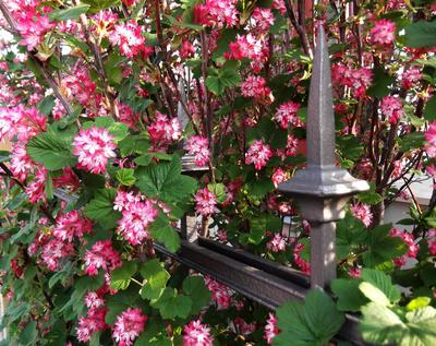 Frühling im Zaun