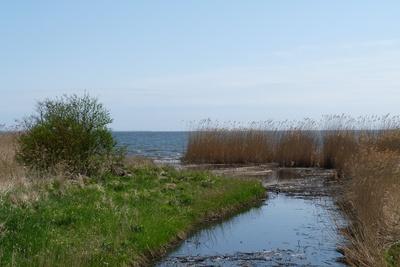 Uferzone am Stettiner Haff /Usedom