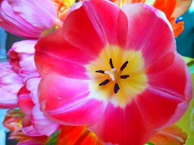 Frühlingsblume 3