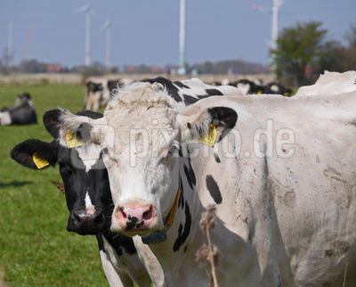 Kommst du vom Landwirtschaftlichen Wochenblatt ?