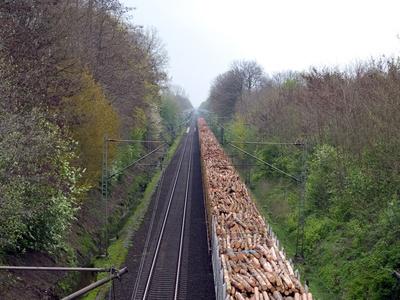 Holztransport auf der Schiene