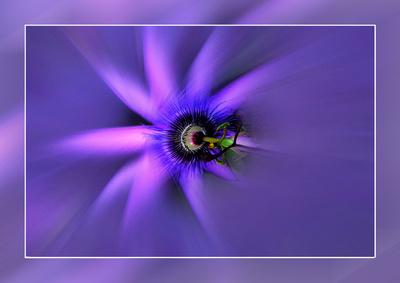 Blume-0177