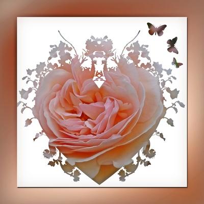 ein Rosentraum