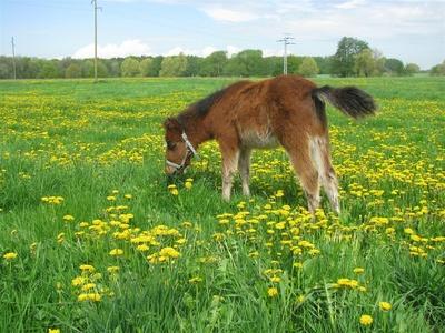 Ponyfohlen2