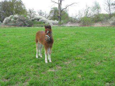 Ponyfohlen3