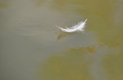 schwimmende Feder