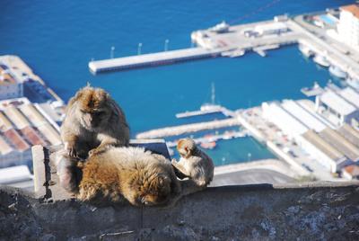 Fels von Gibraltar mit seinen Magot-Affen