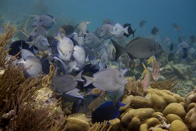 Fischschwarm zieht durch das Riff
