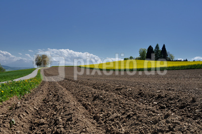 Perspektiven im Ackerbau