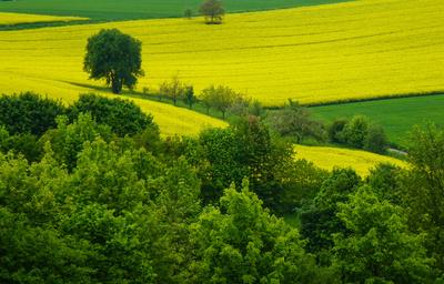 Frühling grün-gelb