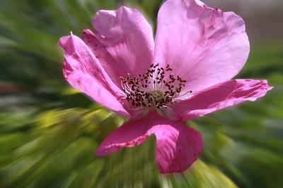 Blume-0191