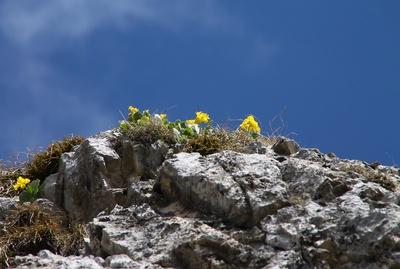 Leuchtende Farben der Bergwelt 07
