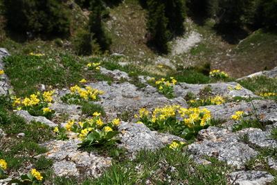 Leuchtende Farben der Bergwelt 08