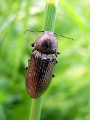 Hübscher Käfer im Landschaftsschutzgebiet