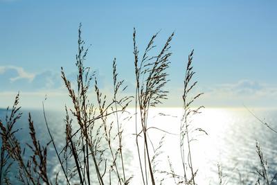 Sonnenschein in hohen Gräsern