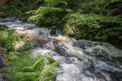 Rauschende Wasser im Schwarzwald