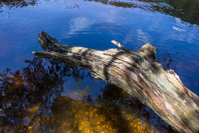 Karsee mit abgestorbenem Baumrest