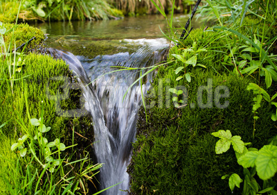 Quellwasser am See 2