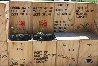 Teepflanze und Hocker