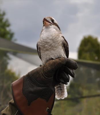 ...ein schräger Vogel mit Humor