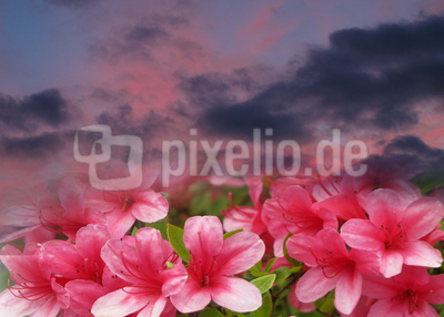 Sommerabend in Pink