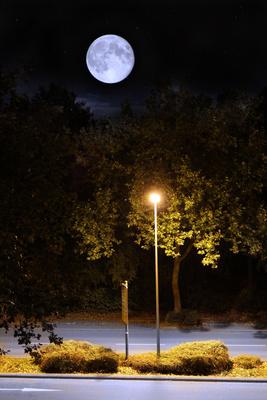 Sommernacht mit Mond
