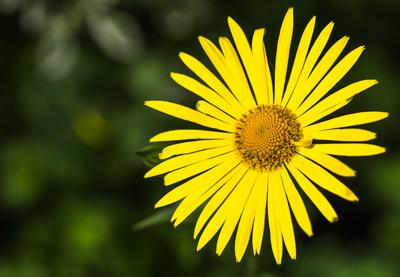strahlende Blüte