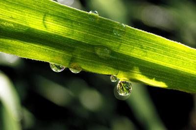 Grüne Perlen