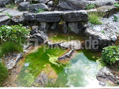 Wieviele kleine Kröten sind im oder um den Teich?