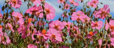 Sommerliche Farbenfreude
