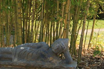 Bambus und liegender Buddha