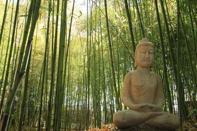 Bambus und sitzender Buddha.