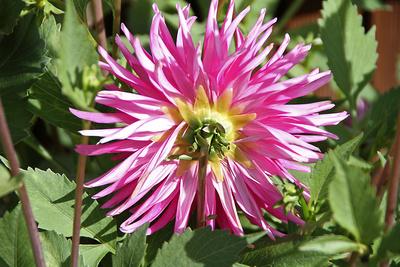 Blume-0197
