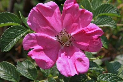 Blume-0198