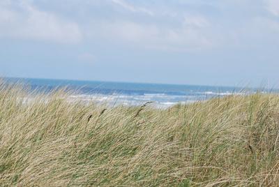 Stranddünen & Nordsee