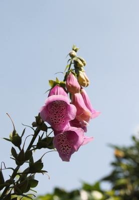 Sommerblüten im Juli... 01