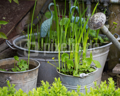 Schatten- und Wasserpflanzen in Zinkbehältern